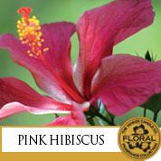 ico-pinkhibiscus